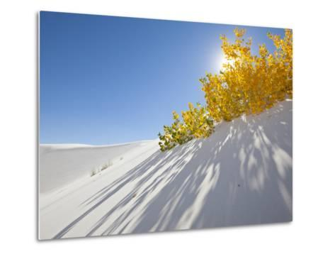 Cottonwood Trees with Fall Color in White Sands National Monument-Derek Von Briesen-Metal Print