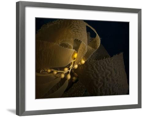 A Kelp Stem-Cesare Naldi-Framed Art Print