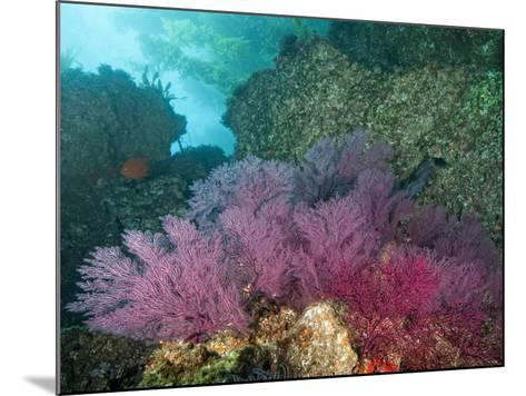 A Coral Formation-Cesare Naldi-Mounted Photographic Print