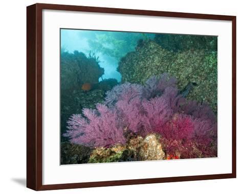 A Coral Formation-Cesare Naldi-Framed Art Print