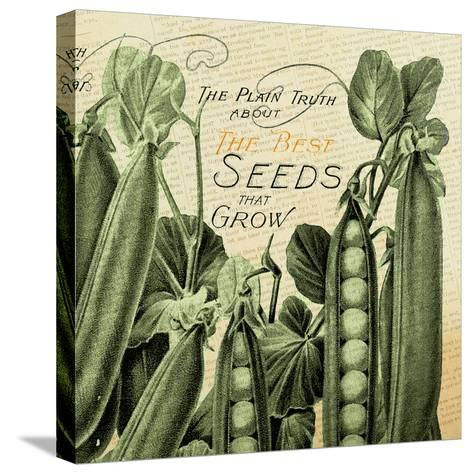 Seeds 1--Stretched Canvas Print
