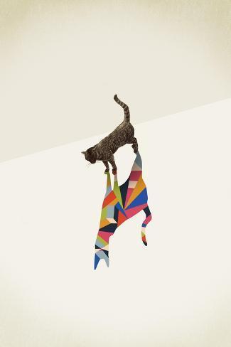 Cat 2-Jason Ratliff-Stretched Canvas Print