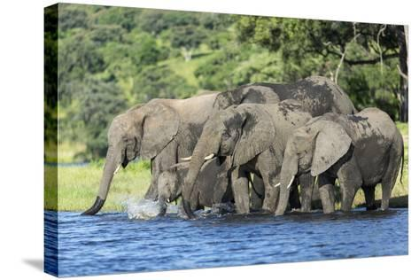 African Elephant Herd, Chobe National Park, Botswana-Paul Souders-Stretched Canvas Print
