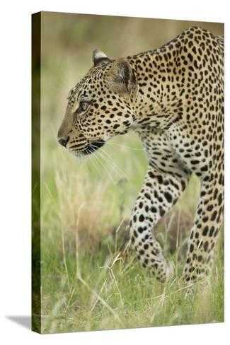 African Leopard-Mary Ann McDonald-Stretched Canvas Print