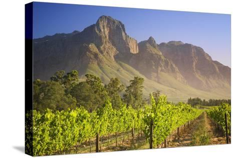 Rows of Grapevines at Vineyard-Jon Hicks-Stretched Canvas Print