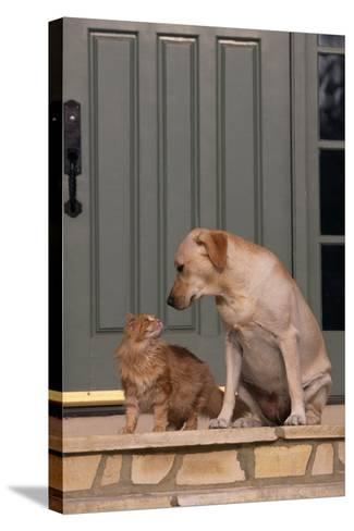 Cat and Labrador Sitting on Front Step-DLILLC-Stretched Canvas Print
