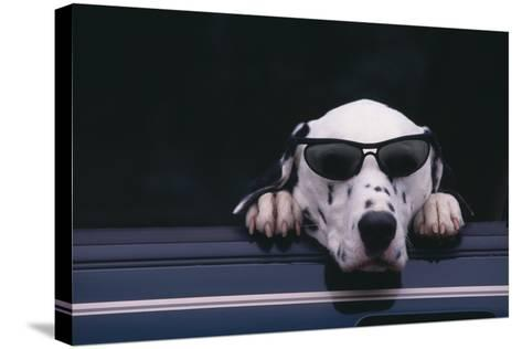 Dalmatian Wearing Sunglasses-DLILLC-Stretched Canvas Print