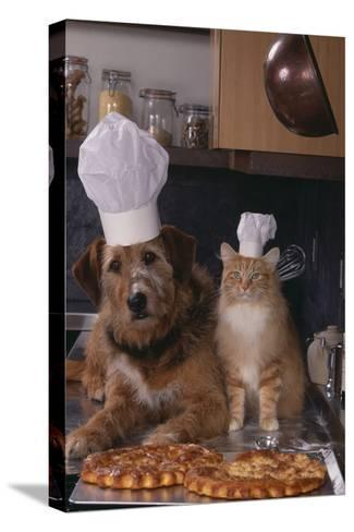 Dog and Cat Making Pizza-DLILLC-Stretched Canvas Print