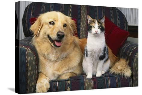 Cat and Dog Sitting Together-DLILLC-Stretched Canvas Print