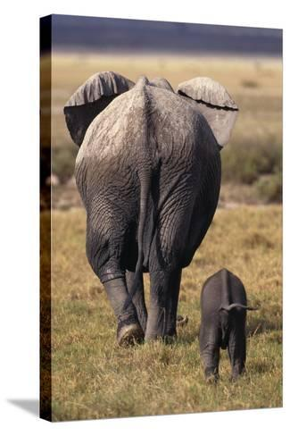Mother and Baby Elephant-DLILLC-Stretched Canvas Print
