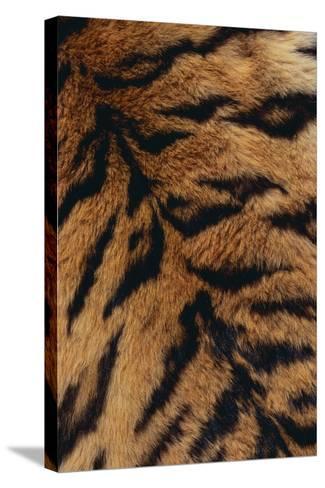 Tiger Fur-DLILLC-Stretched Canvas Print