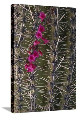 Flowers on Cactus-DLILLC-Stretched Canvas Print