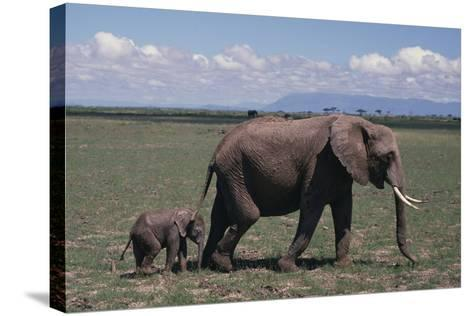 Elephant Adult and Baby-DLILLC-Stretched Canvas Print