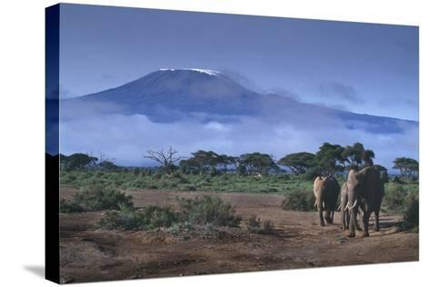 Elephants and Mountain-DLILLC-Stretched Canvas Print