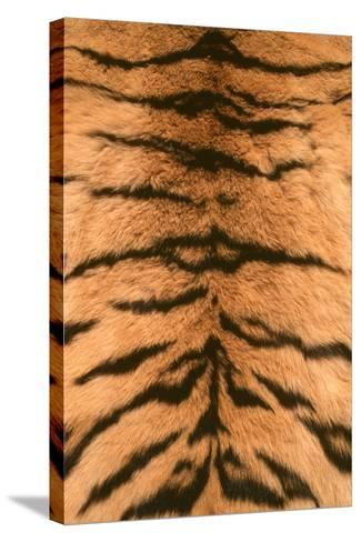 Tiger Fur-DLILLC-Stretched Canvas Print