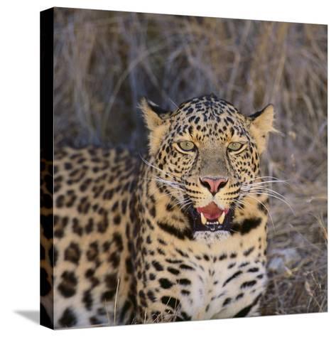 Leopard-DLILLC-Stretched Canvas Print