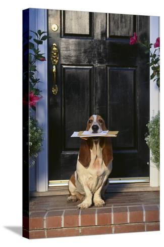 Basset Hound Waiting with the Mail-DLILLC-Stretched Canvas Print