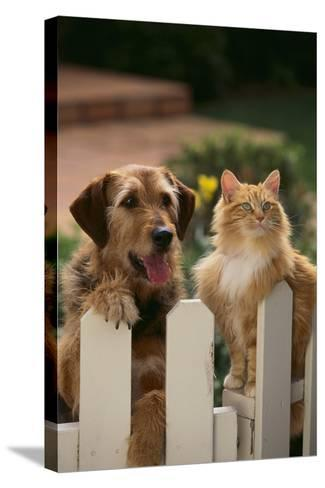 Dog and Cat Waiting beside the Fence-DLILLC-Stretched Canvas Print
