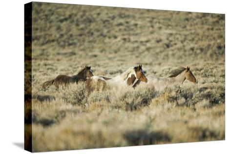 Wild Horses Running-DLILLC-Stretched Canvas Print