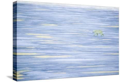 Polar Bear on a Sea of Ice-DLILLC-Stretched Canvas Print