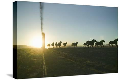 Quarter Horses Running by Fence Line-DLILLC-Stretched Canvas Print