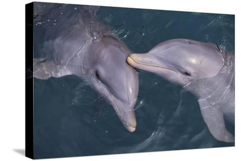 Dolphins-DLILLC-Stretched Canvas Print