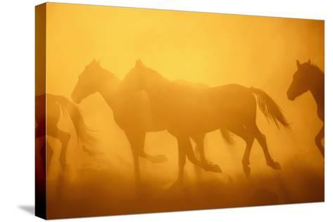 Wild Horses-DLILLC-Stretched Canvas Print