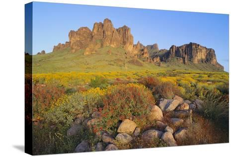 Wildflowers in the Desert-DLILLC-Stretched Canvas Print