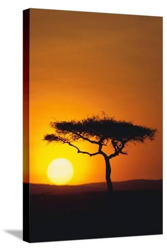 Sunset behind a Tree-DLILLC-Stretched Canvas Print