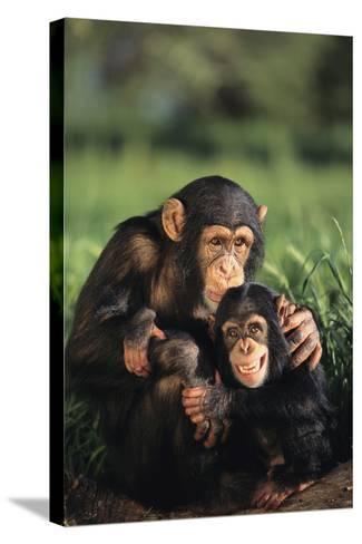 Happy Chimpanzee Family-DLILLC-Stretched Canvas Print