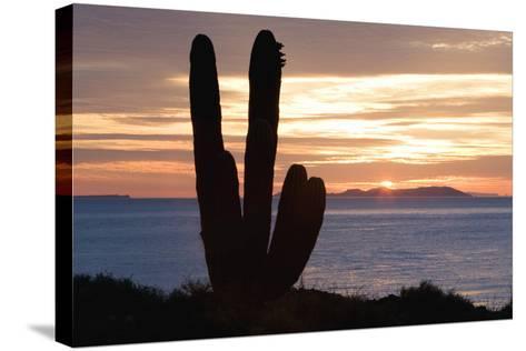 Sunset off Baja Coast-DLILLC-Stretched Canvas Print