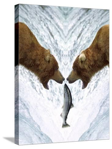 Grizzly Bears Catching Fish-DLILLC-Stretched Canvas Print
