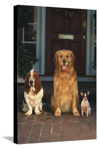 Three Dogs on Porch-DLILLC-Stretched Canvas Print