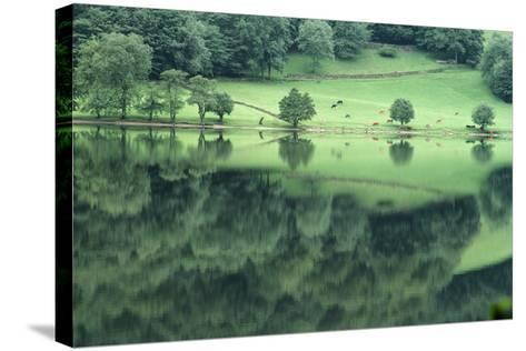 Cattle Grazing in Lake District-DLILLC-Stretched Canvas Print