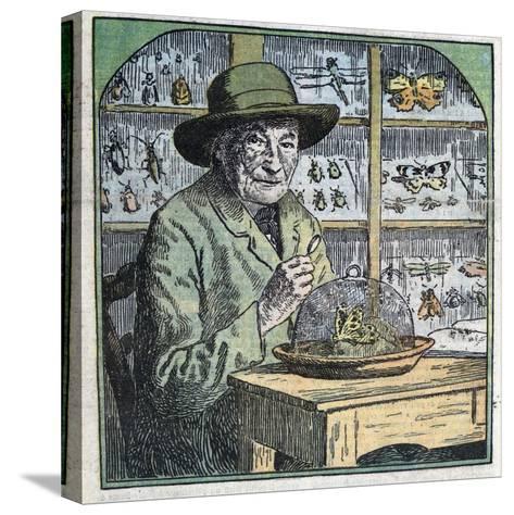 Portrait of Jean-Henri Fabre Entomologist-Stefano Bianchetti-Stretched Canvas Print