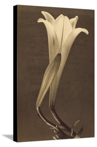 No. 1 by Tina Modotti--Stretched Canvas Print