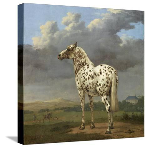 The Piebald Horse by Paulus Potter--Stretched Canvas Print