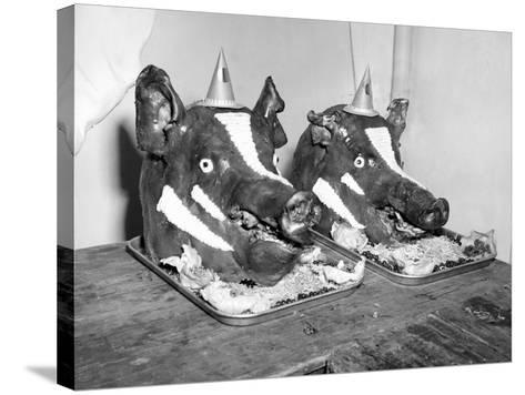 Two Well Decorated Roasted Pigs Heads in Australia, Ca. 1955.-Kirn Vintage Stock-Stretched Canvas Print
