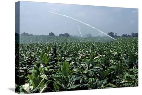 Watering of Tobacco Plantation, Lexington, Kentucky, Usa, August 1984-Alain Le Garsmeur-Stretched Canvas Print