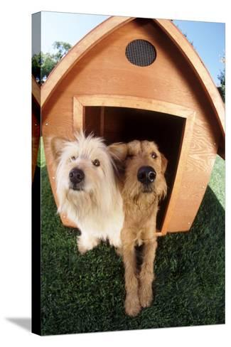 Dogs Sharing a House-DLILLC-Stretched Canvas Print