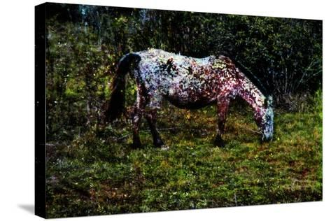 Piebald-Andr? Burian-Stretched Canvas Print