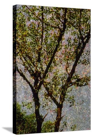 Nature-Andr? Burian-Stretched Canvas Print