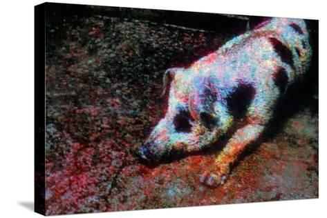 Pig-Andr? Burian-Stretched Canvas Print