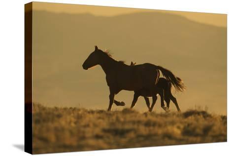Wild Horse Mother and Foal-DLILLC-Stretched Canvas Print