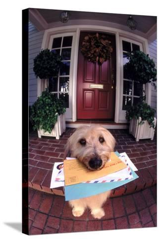 Dog Holding Mail-DLILLC-Stretched Canvas Print