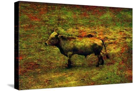 Bull-Andr? Burian-Stretched Canvas Print