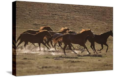 Herd of Stampeding Horses-DLILLC-Stretched Canvas Print