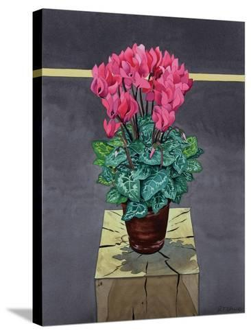 Still Life Cyclamen-Christopher Ryland-Stretched Canvas Print