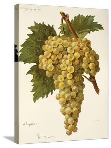 Timpurie Grape-A. Kreyder-Stretched Canvas Print