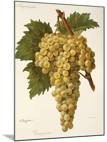Timpurie Grape-A. Kreyder-Mounted Giclee Print